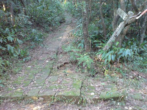 往五指山的石階步道