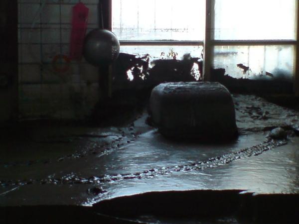 大水竟然沖來烏龜