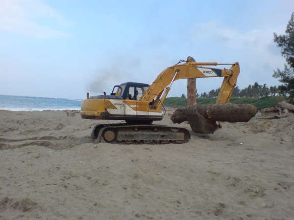 用挖土機搬運大根的