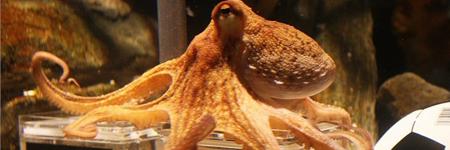 paul_octopus.jpg