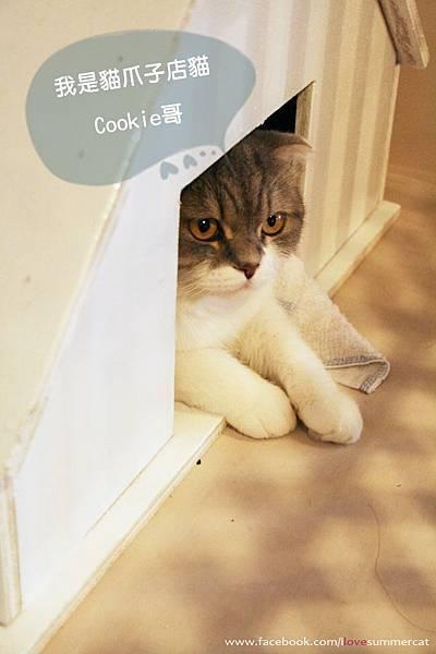 貓爪子咖啡_貓03.jpg