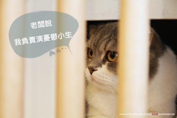 貓爪子咖啡_貓04.jpg