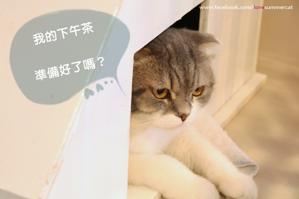 貓爪子咖啡_貓05.jpg