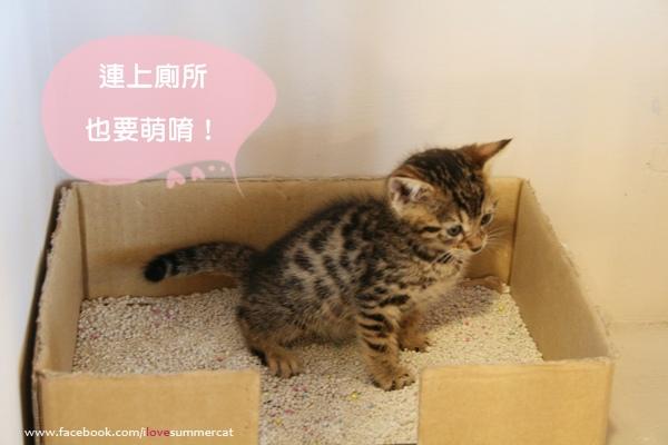 貓爪子咖啡_貓07.jpg