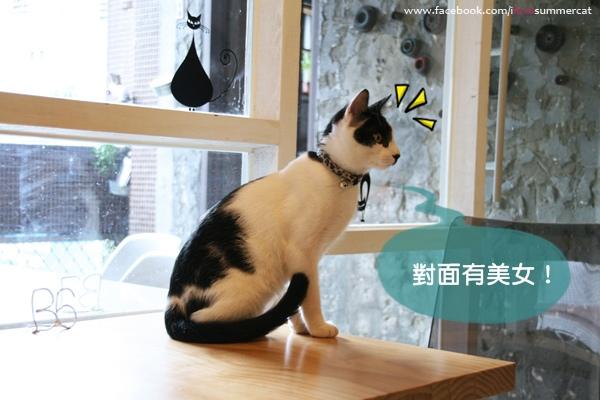 貓爪子咖啡_貓10.jpg