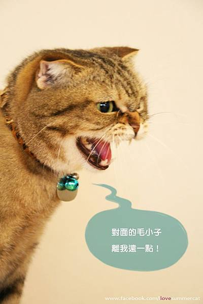 貓爪子咖啡_貓12.jpg