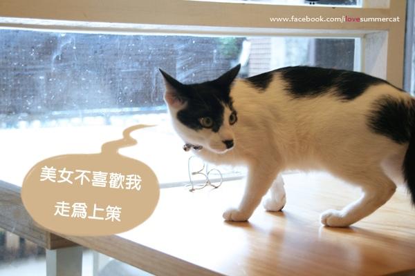 貓爪子咖啡_貓13.jpg