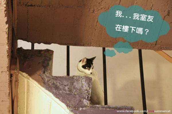 貓爪子咖啡_貓15.jpg