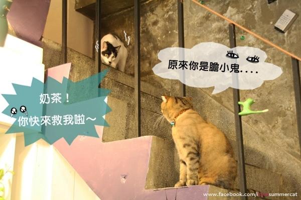 貓爪子咖啡_貓17.jpg