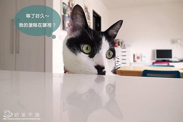 夏貓生日蛋糕_06.JPG