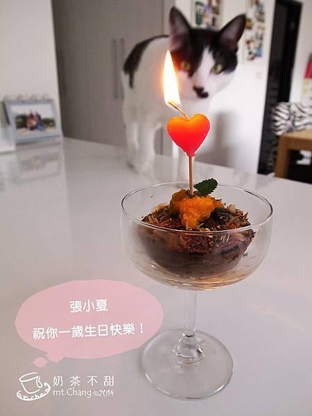 夏貓生日蛋糕_16.JPG