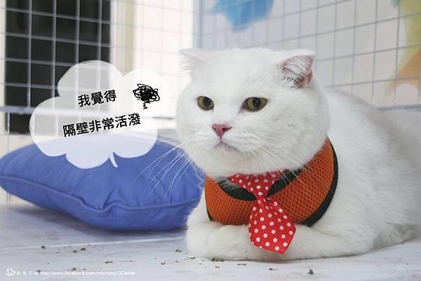 貓籠_28