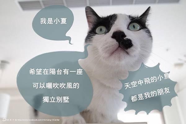 貓籠_41