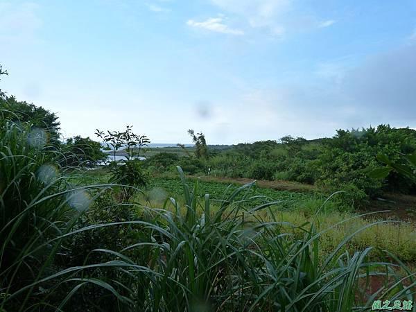 後洲子山20130707 (16)
