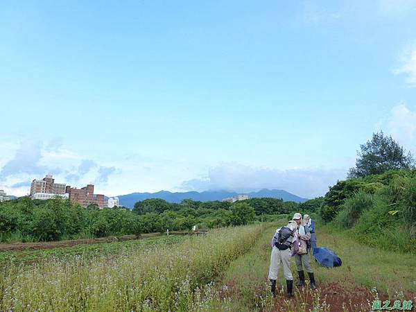 後洲子山20130707 (17)