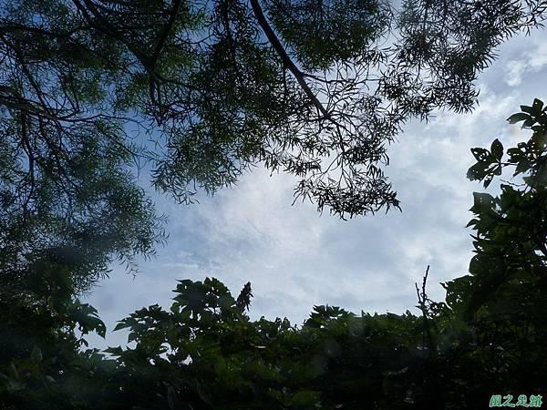 後洲子山20130707 (52)