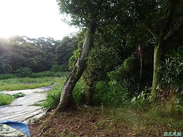 後洲子山20130707 (77)