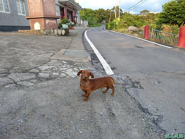 後洲子山20130707 (94)
