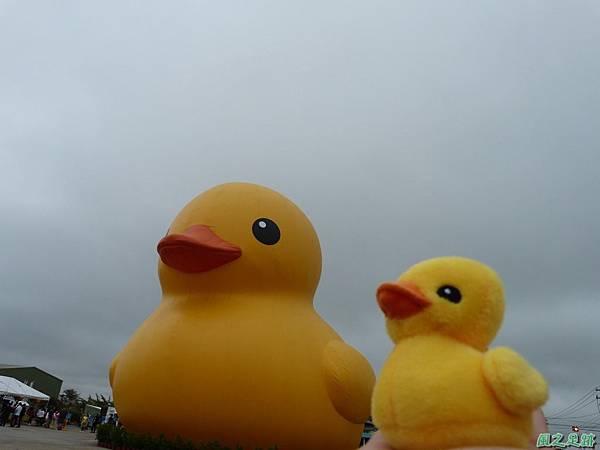 黃色小鴨20131103_3