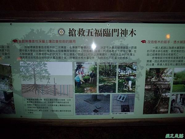 石岡五福臨門神木20131116 (33).JPG