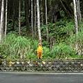 翠峰湖山行20070707(14).jpg