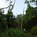 翠峰湖山行20070707(65).jpg