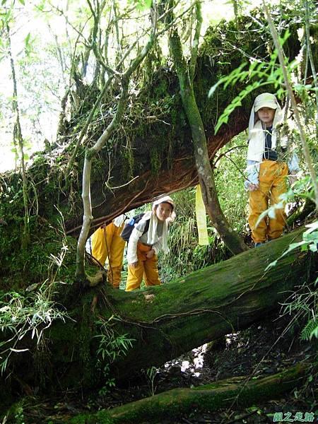多門山20070707(55)