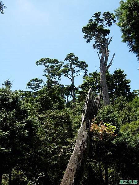 多門山20070707(64)