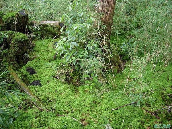 多門山20070707(92)