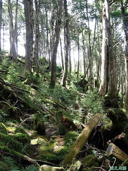 多門山20070707(93)