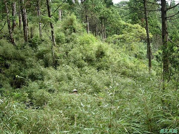 多門山20070707(95)