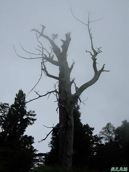 多門山20070707(123)