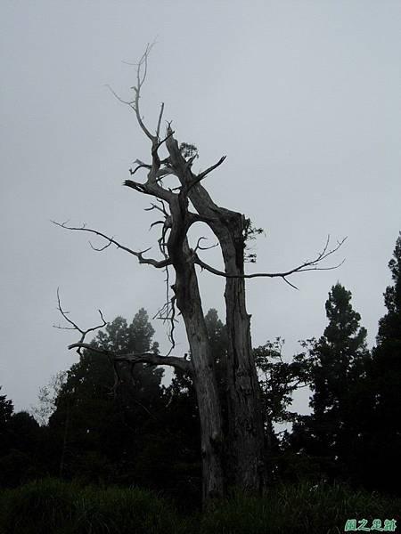 多門山20070707(124)