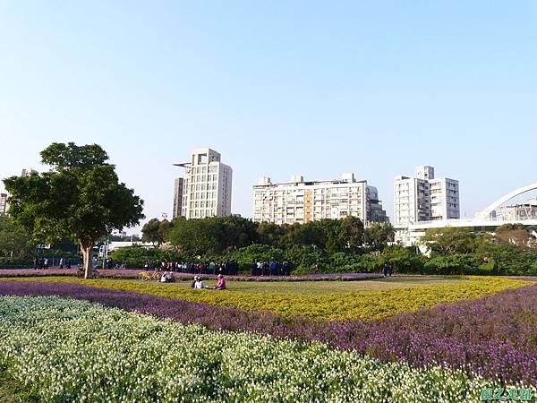 北市河濱花海地景20131202(21)