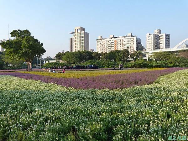 北市河濱花海地景20131202(24)