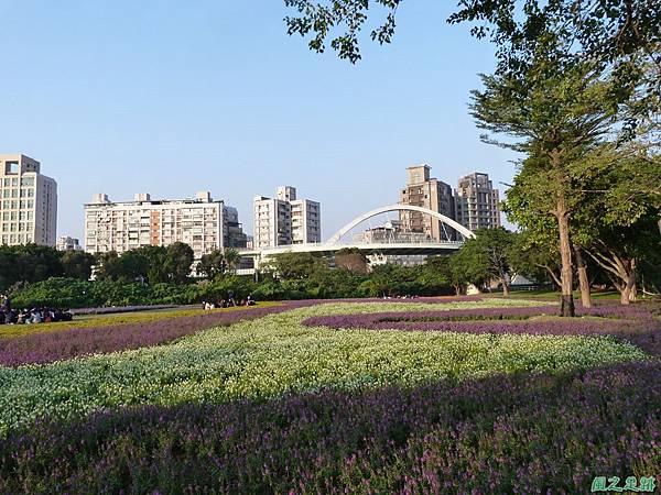 北市河濱花海地景20131202(25)