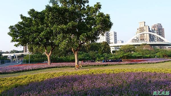 北市河濱花海地景20131202(32)