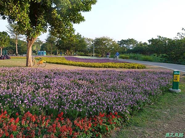 北市河濱花海地景20131202(38)