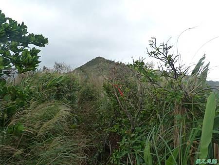 南雅山環行20131108(26)