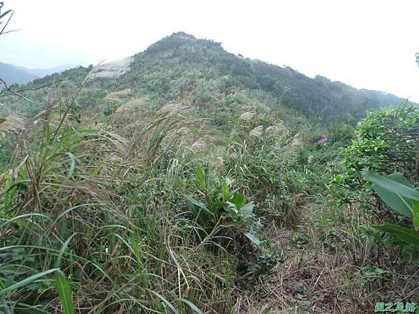 南雅山環行20131108(30)
