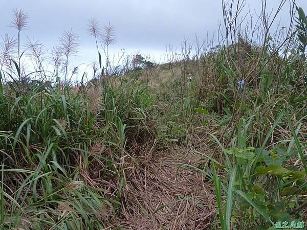 南雅山環行20131108(36)