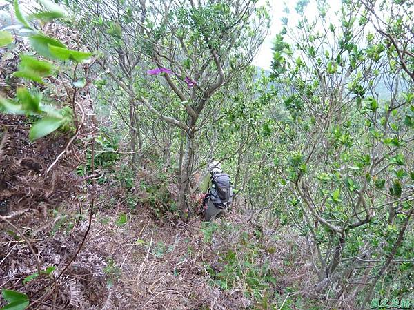 南雅山環行20131108(94)
