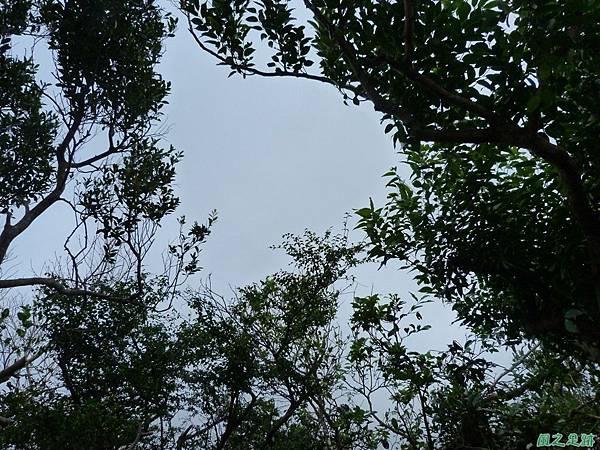 南雅山環行20131108(155).JPG