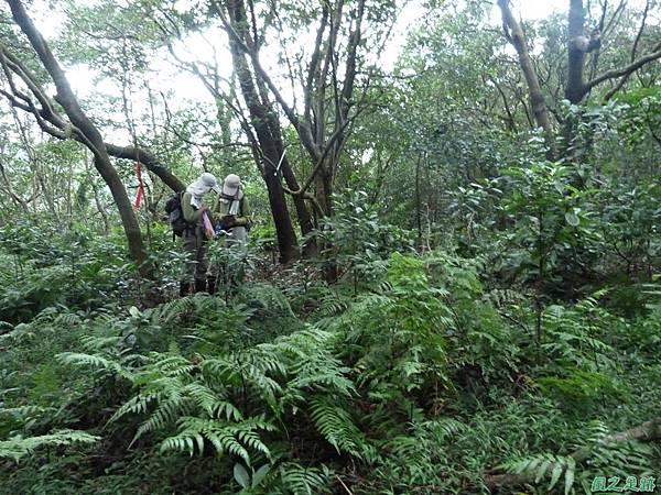 南雅山環行20131108(230)