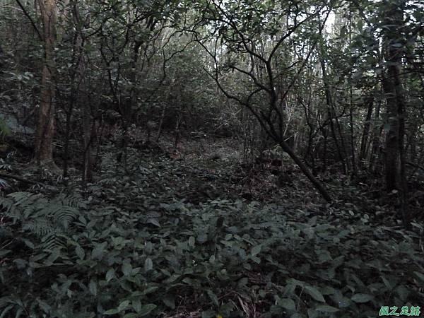 南雅山環行20131108(250)