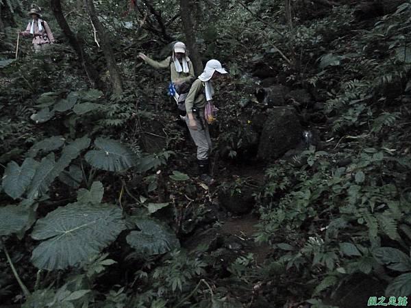 南雅山環行20131108(252)