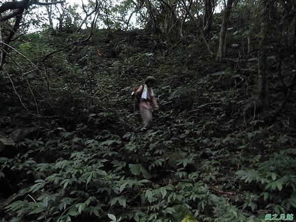 南雅山環行20131108(255)
