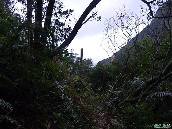 南雅山環行20131108(257)