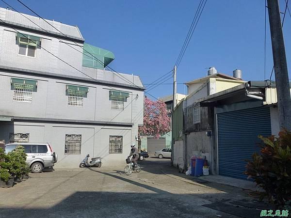 龍潭美人樹20131130(42)