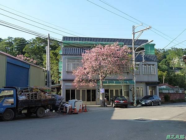 龍潭美人樹20131130(44)